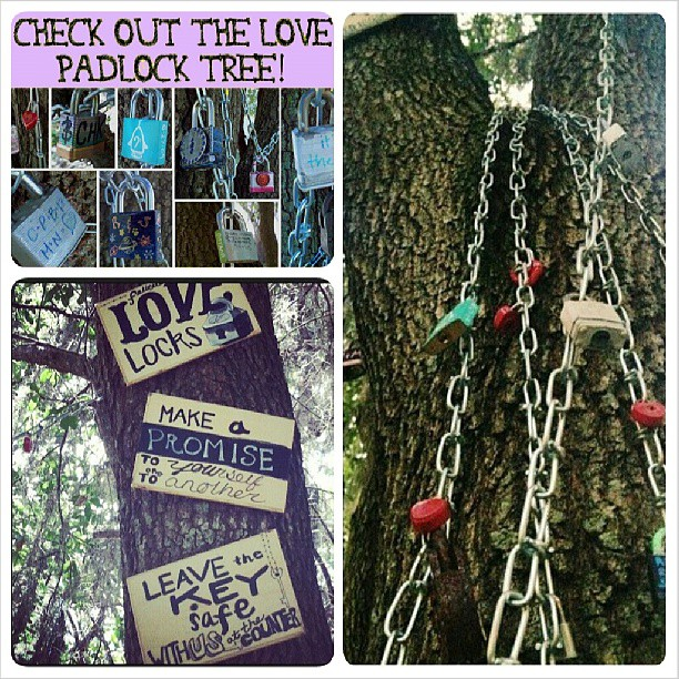 The Love Padlock Tree could use some more love! #makelovelocks #lovelockstampa